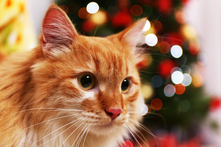 Lovable red cat on Christmas tree background Stock Photo