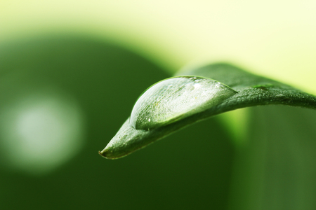 Dew drop on leaf on blurred light background Stock Photo