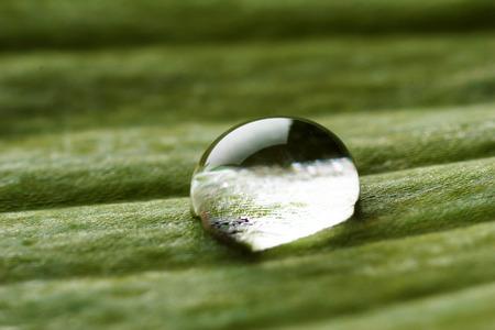 Dew drop on leaf, macro view