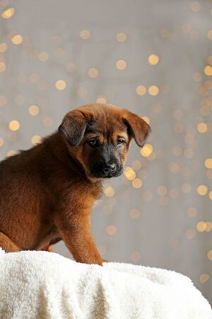 Cute puppy on Christmas lights background Imagens