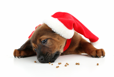 Cute puppy with Santa hat isolated on white Stock Photo