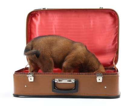 Cute puppy in leather suitcase isolated on white