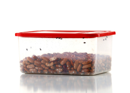 Container with broken beans and insects isolated on white