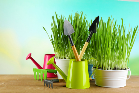Fresh green grass in small metal buckets, watering can and garden tools on wooden table, on bright background Zdjęcie Seryjne