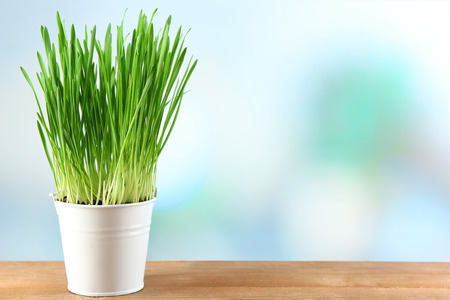 Fresh green grass in small metal bucket, on wooden table, on bright background