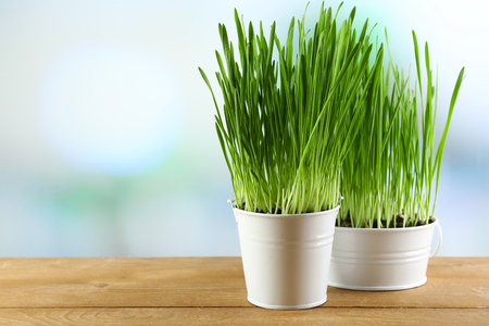 Fresh green grass in small metal buckets, on wooden table, on bright background Stock Photo