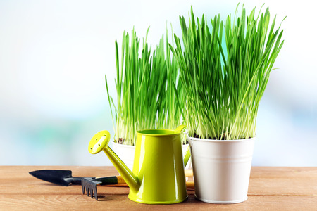 Fresh green grass in small metal buckets, watering can and garden tools on wooden table, on bright background Stock Photo