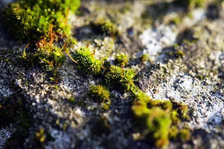 Green moss on stone background Stock Photo