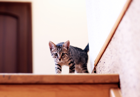 Kitten on staircase, indoors Stock Photo