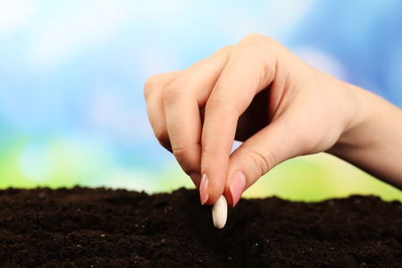 Female hand planting white bean seed in soil on blurred background