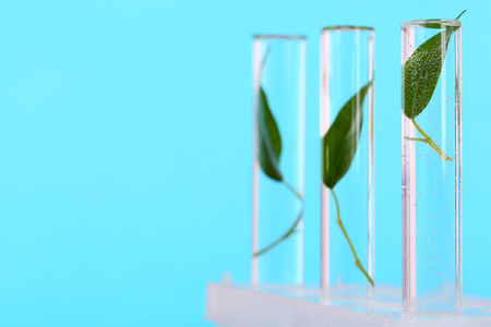 Green leaves in test tubes on color background