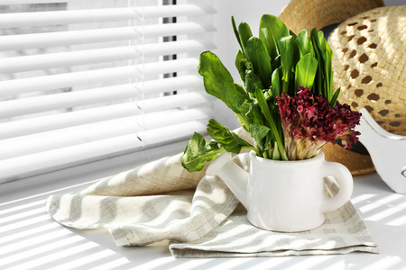 Watering can with variety of green leaves for salad on windowsill Stock Photo