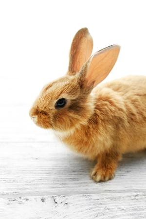 Cute brown rabbit on windowsill, closeup