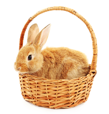 Cute brown rabbit in wicker basket isolated on white Stock Photo