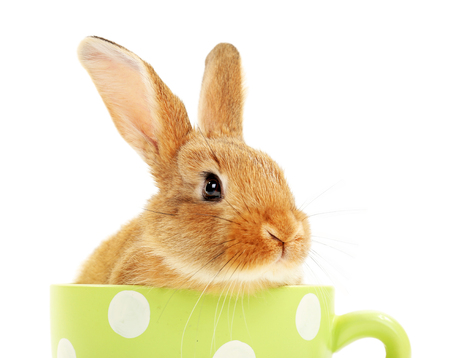 Cute brown rabbit in green dots cup isolated on white Stock Photo