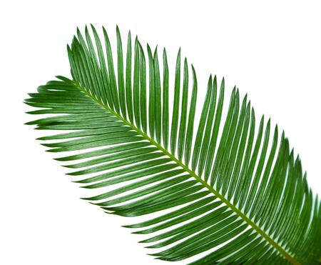 Green palm branch on light background Stock Photo