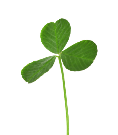 Green clover leaf, isolated on white