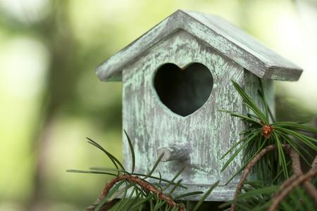 Scatola di nidificazione decorativa sul ramo, su sfondo verde