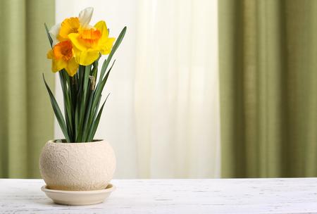 Beautiful daffodils in pot on fabric background