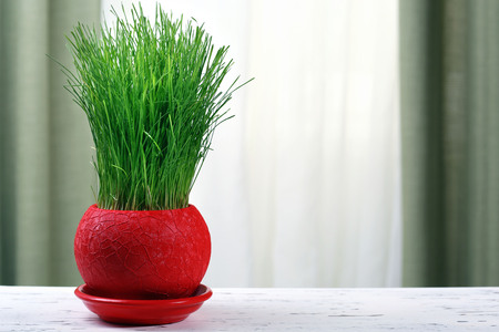 Green grass in pot on fabric background Stock Photo