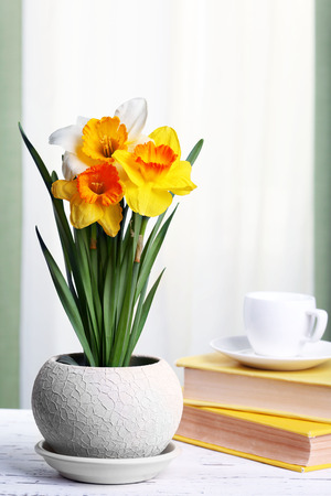 Beautiful daffodils in pot with books on fabric background Stock Photo