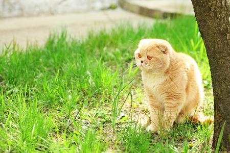草の背景に英国の猫