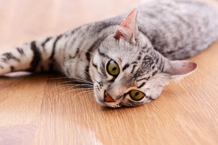 Beautiful cat lying on floor close-up