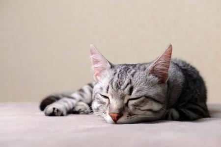 Beautiful cat on beige background Stock Photo