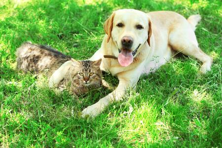 Amable perro y gato descansando sobre fondo de hierba verde