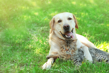 Amable perro y gato descansando sobre fondo de hierba verde Foto de archivo