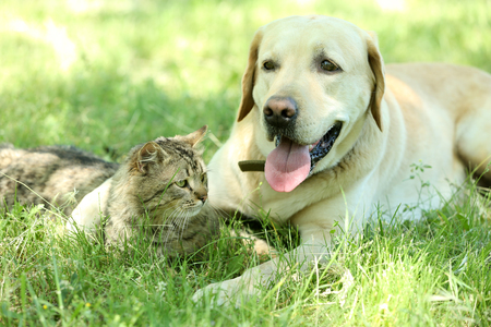 Friendly dog and cat resting over green grass background