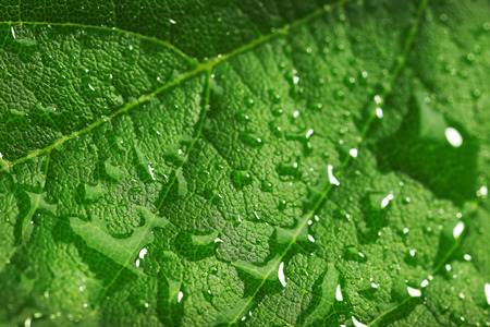 Green leaf with droplets, closeup Stock Photo
