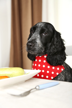 Dog looking at plate of fresh vegetables on dining table Foto de archivo