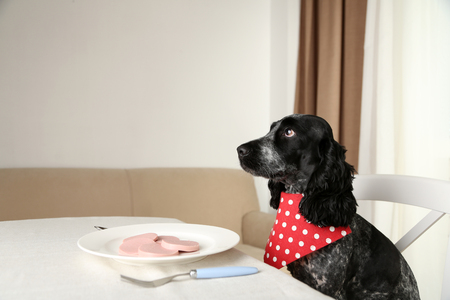 Dog looking at plate of sliced sausage on dining table Foto de archivo