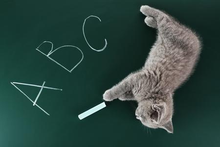 Cute gray kitten on green chalkboard background Stock Photo