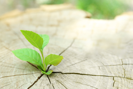 Plant growing through trunk of tree Stock Photo