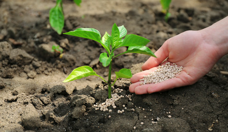 Female hand with fertilizer for plant over soil background Archivio Fotografico