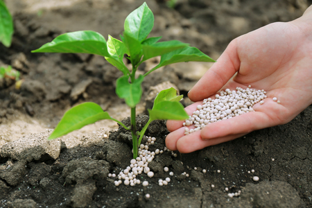 Female hand with fertilizer for plant over soil background Stockfoto