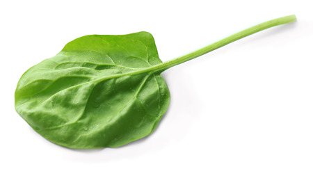 Fresh spinach leaf isolated on white