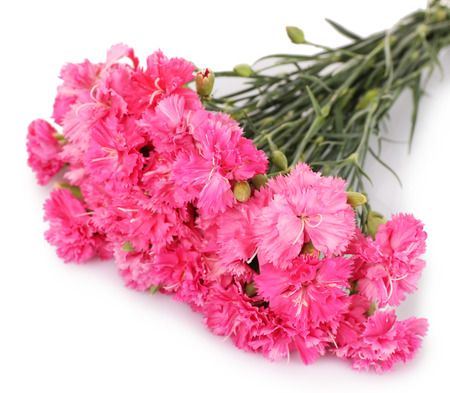 Beautiful bouquet of pink carnation isolated on white Фото со стока