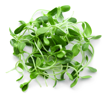 Green young sunflower sprouts isolated on white Stock Photo