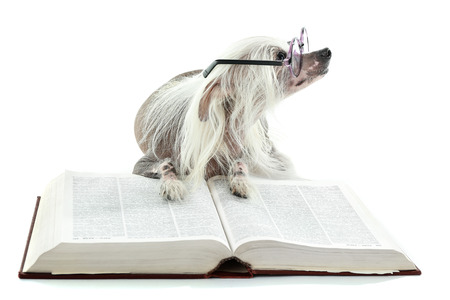 Hairless Chinese crested dog with glasses and book isolated on white