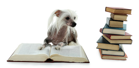 Hairless Chinese crested dog with heap of books isolated on white Stock Photo