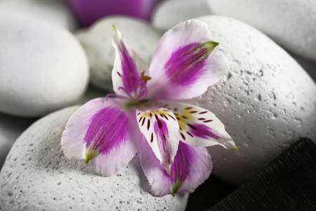 Spa still life with purple flowers and pebbles, closeup Stock Photo