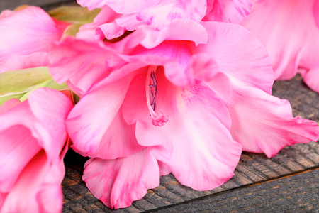 Beautiful gladiolus on wooden table close up Stock fotó