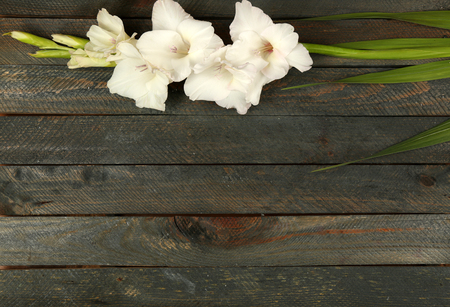 Beautiful gladiolus on wooden background