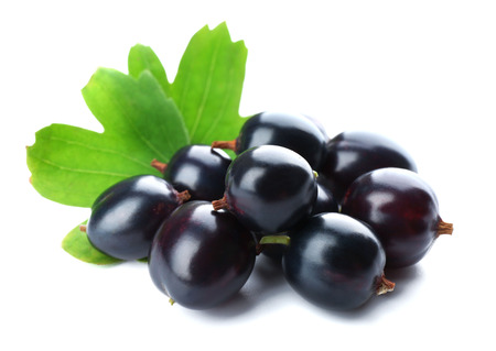 Wild black currant with green leaves isolated on white Banque d'images