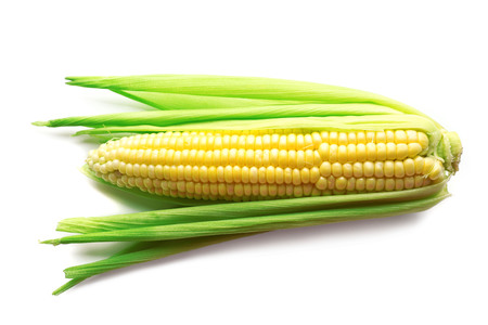 Fresh corn on cob isolated on white