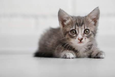Cute gray kitten on floor at home