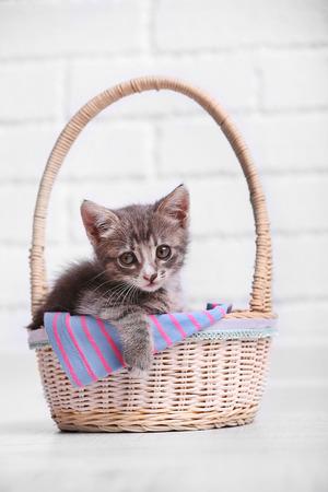 Cute gray kitten in basket in room Reklamní fotografie